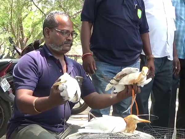 Try to sell it alive Crane and Green parrot Recovered by Puducherry Forest Department