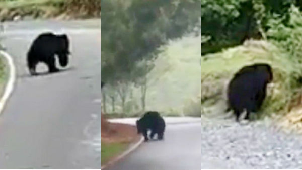 In Coonoor area the wandering bear and Public fears