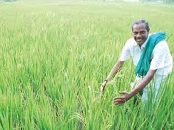 The 13th National Nel Festival started in Tiruthuripoondi.. Farmers interested in participation