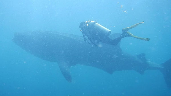 Swimming training in Puducherry, Whale played back to surprise
