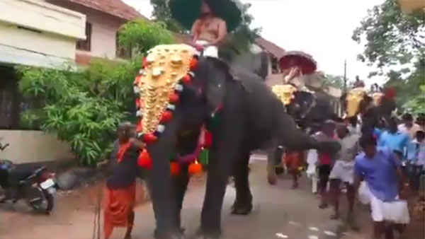 Elephant kick goes viral