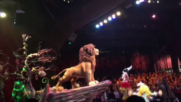 Real Lion king in Florida Show