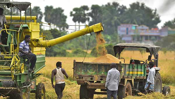 Tamil Nadu farmers ignoring subsidy seed .. Interests in cultivating rice in Andhra and Telangana