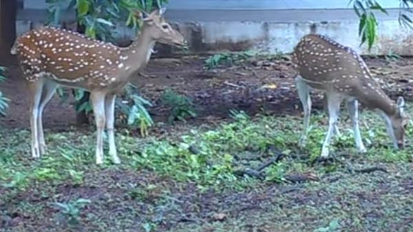 can clri deers be shifted to other places