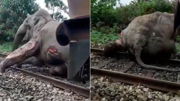 A video shows that train hits elephant and drags it to 30 metre in West Bengal