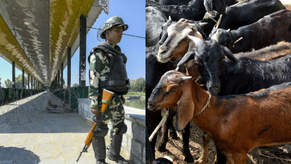 காஷ்மீரில் 370வது பிரிவு... திரிபுராவில் ஆடு, கோழி தடை... டென்ஷனில் எல்லை பிரதேசங்கள்