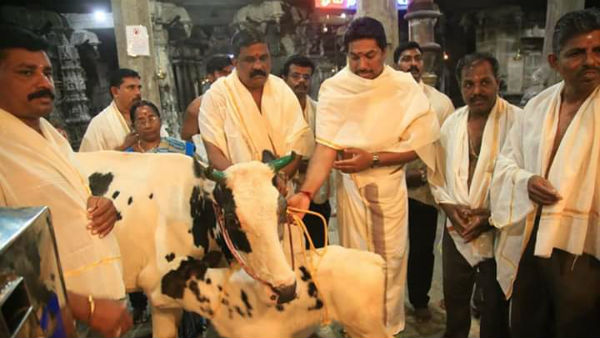 Ops son donate cow to the dhanumalayan temple