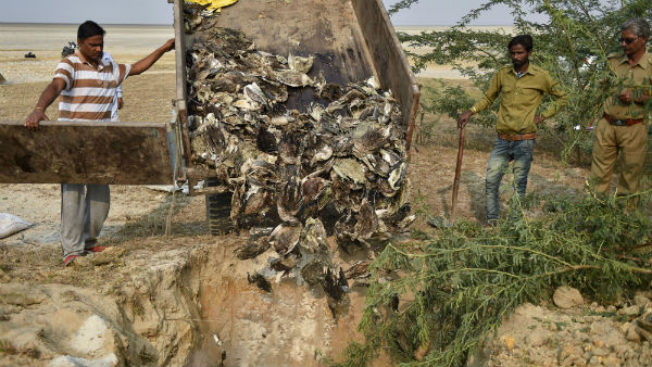 Mass Death of Migration Birds in Gujarat and Rajasthan