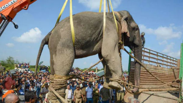 krishna elephant dies of cardiac arrest in assam