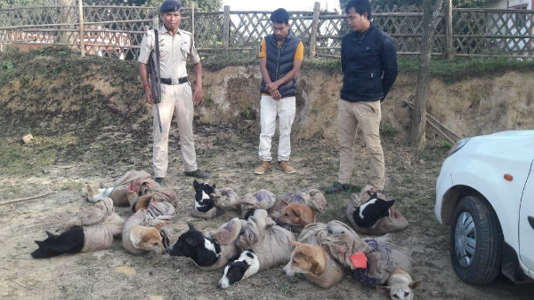 Police arrested two persons from Tripura-Mizoram border with 12 stray dog