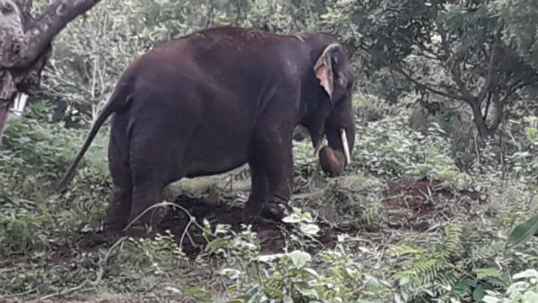 A mahout was killed by his elephant at Salem