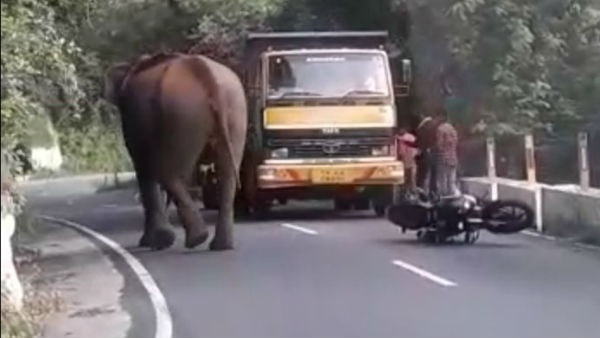 A wild elephant walking along the road on the Kotagiri Mettupalayam State Highway