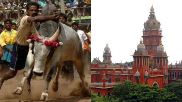 Case filed in high court for permission to hold Jallikattu in Ariyalur district