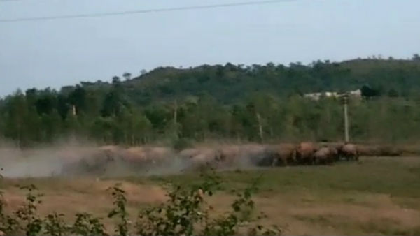 60 wild elephants chasing a dense forest in Hosur