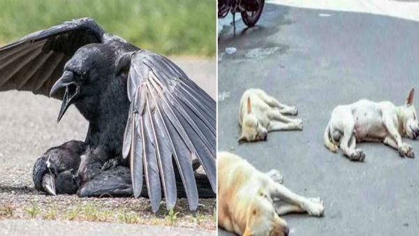 3 dogs and 50 crows death in nagai district kaveripoompattinam