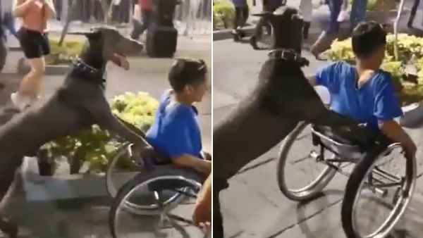 Dog pushes the wheelchair of a specially-abled boy in a viral video