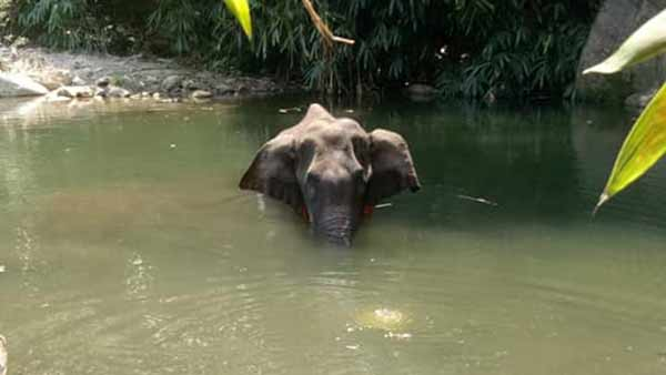 kerala elephant death : national green tribunal court notice to kerala forest department