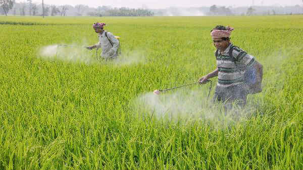 நாட்டில் குறுவைப் பயிர்கள் சாகுபடிப் பரப்பு கடந்த ஆண்டை விட 21.2% அதிகம்- மத்திய அரசு