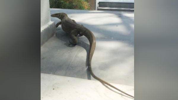 Huge lizard Spotted at someone's home in Delhi Post by IPS officer HGS Dhaliwal