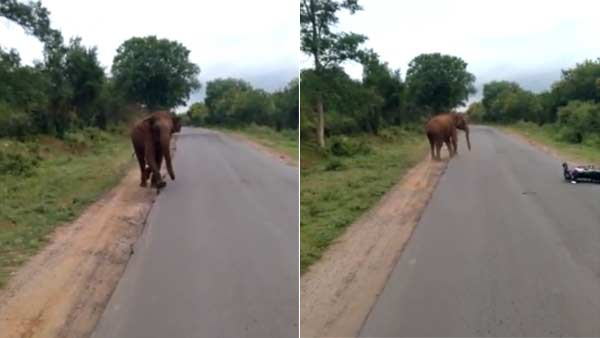 Viral Video Shows Elephant Chasing two wheeler Away near Sathyamangalam