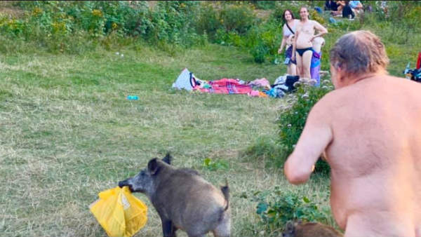 Naked man chases wild boar in viral pics