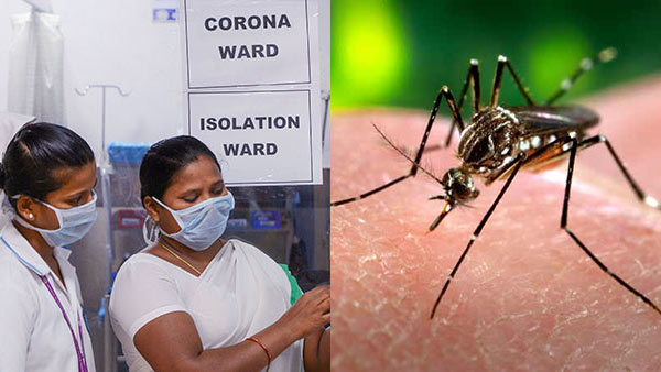 Rapidly spreading dengue in tamilnadu among corona infections