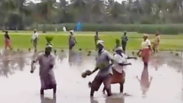 Video goes viral that farmers dances for a song and planting paddy saplings