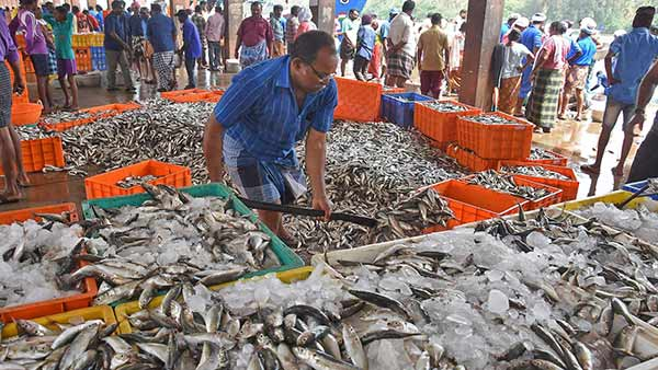 The public is eager to buy meat as the month of Puratasi is over