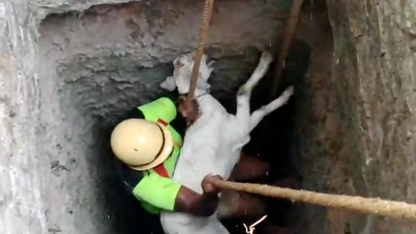 Lamb Slipping into the deep well and rescued near Sathiyamangalam, video