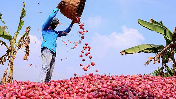 Onion Price Hike: Strict action hoard onions and make a profit - Central Government