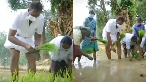Minister SP Velumani in Paddy field This is a different level of politics