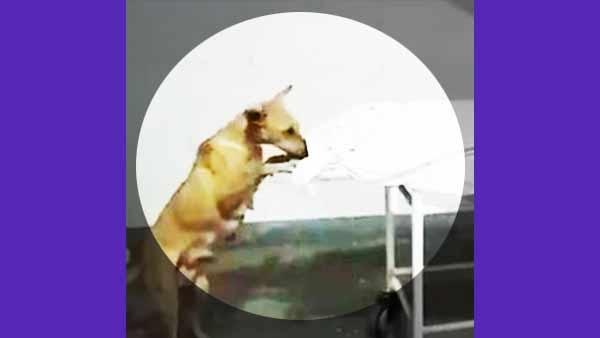 நெஞ்சை நொறுக்கும் வீடியோ.. சிறுமியின் சடலத்தை கடித்து சாப்பிட்ட தெருநாய்.. பகீர் கிளப்பும் உபி!