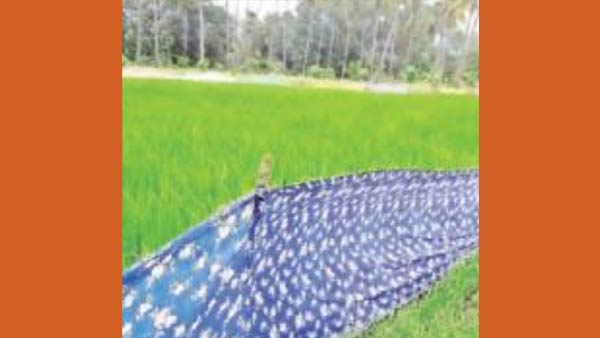 Near Udumalai Damage to crops Hogs Cage system