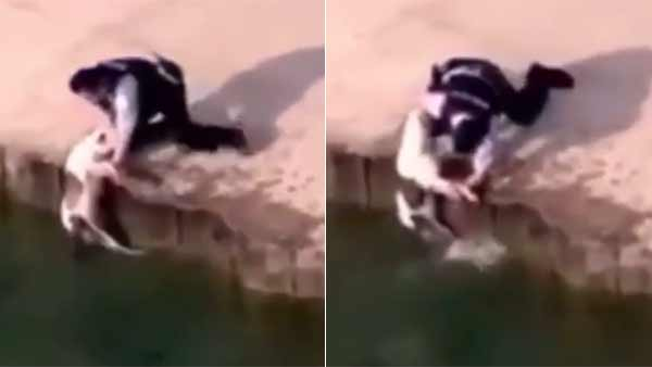 Viral video of police officer saving dog from drowning in Lake Michigan
