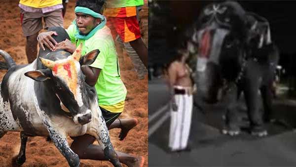 ரீவைண்ட் 2020: ஜல்லிக்கட்டு முதல் ஆண்டாள் யானையின் அசத்தல் பேச்சு வரை திருச்சியில் டாப் 10