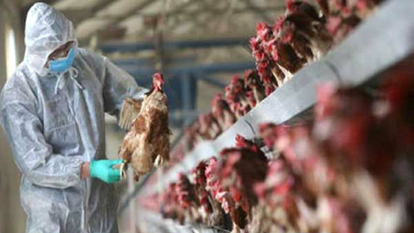 Kerala government has declared bird flu as a state disaster