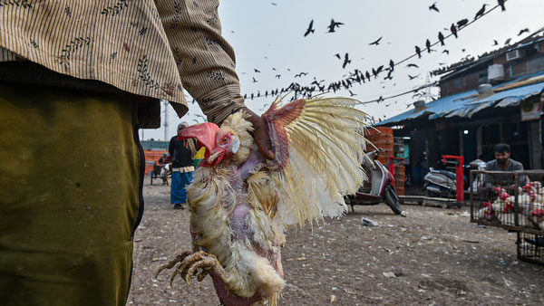 Bird flu panic near Mettur in Salem district