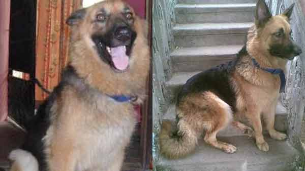 Improper treatment : Woman approches HC for getting justice for her pet dogs death