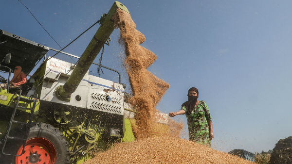 India to became a big rice supplier in world china