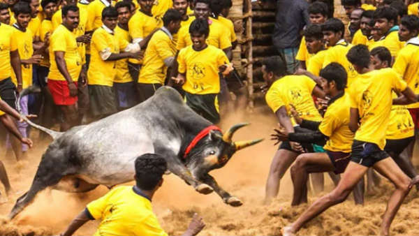 Jallikattu takes place in Avaniyapuram