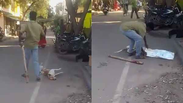 street dog killed by an auto driver madurai viral video