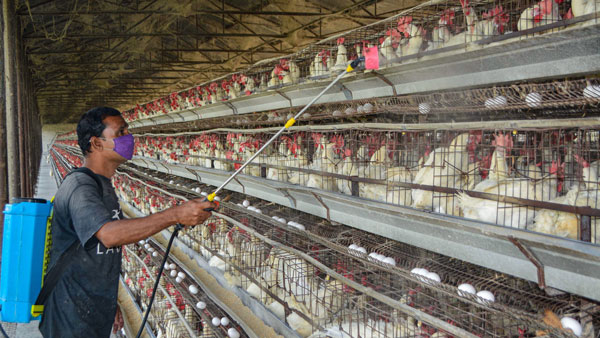 avian influenza in poultry bird confirmed 9 states reports