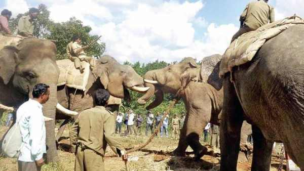 one suspended for Attacking elephant at Coimbatore refreshment camp