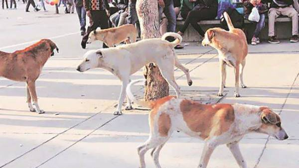 stray dogs bites 4 yrs old kid in thane