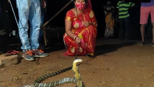 8 அடி ராஜநாகம்கூட இவருக்கு ஜுஜுபி தான்.. லாவகமாக பாம்பு பிடித்து அசத்தும் ஒடிசா பெண்!