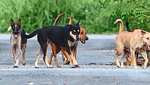Vietnam: Popular dogs on social networking sites killed by covid infection suspicion