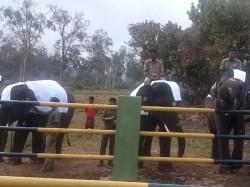 Rejuvenation Camp Jumbos Begins Near Mettupalayam