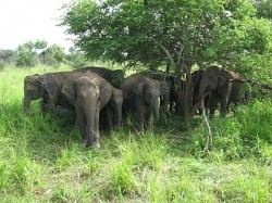 Elephant Died A Fight Its Group
