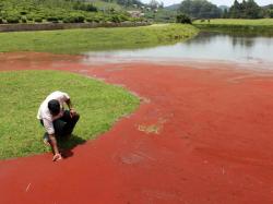 Udagamandalam Dam Water Turning Red Claim Villagers