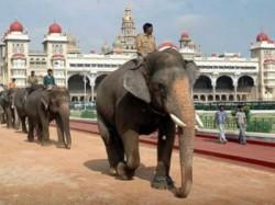 Dasara Elephants Return Back Their Homes